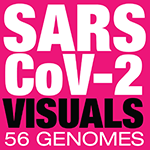 SARS-CoV-2 visualizations of 56 genomes - Martin Krzywinski / Canada's Michael Smith Genome Sciences Centre / mkweb.bcgsc.ca